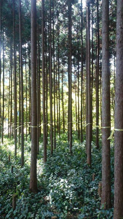 磨丸太用山林
