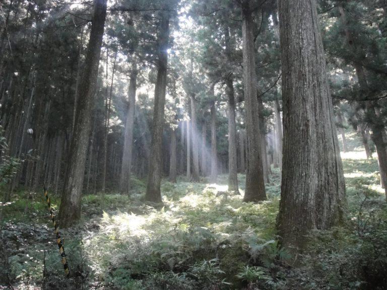 樹齢約300年の森