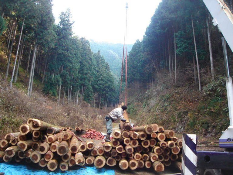土場にて仕分け作業中(桁丸太と製材用原木)