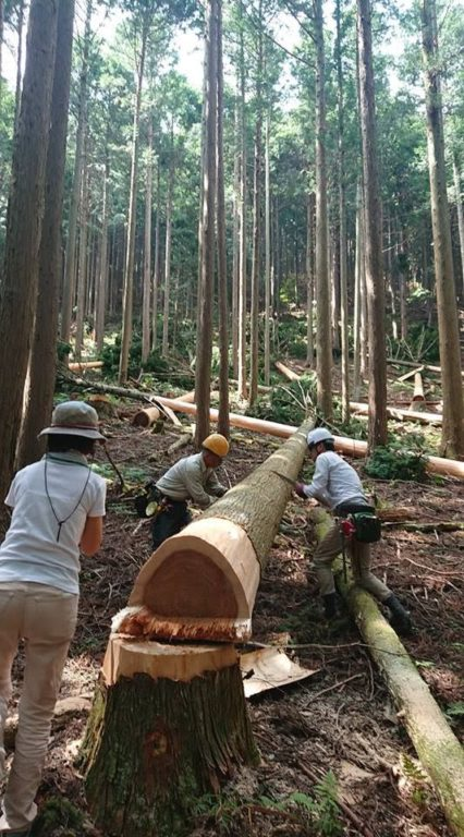 杉の原木から杉皮を剝くところ