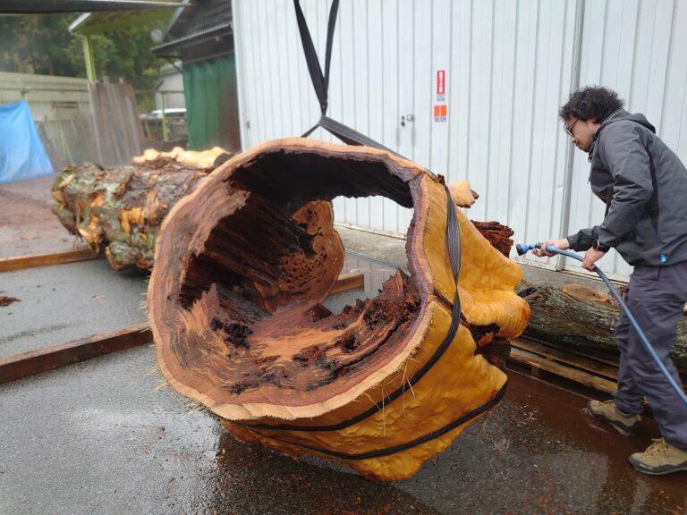 穴あきの木